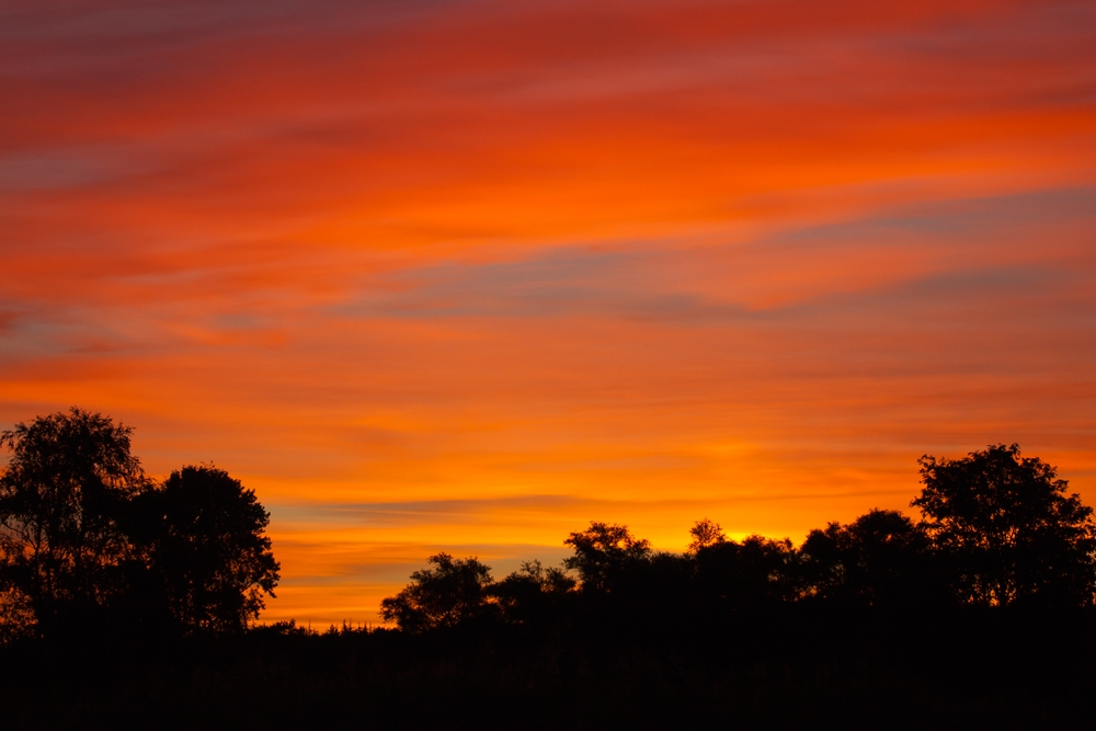 Sonnenaufgang, Saaler Bodden